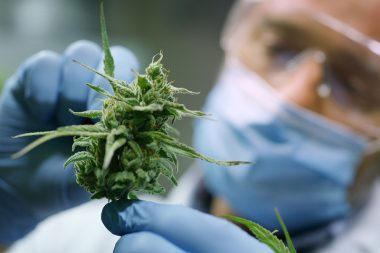 Thumb Cannabis Science
